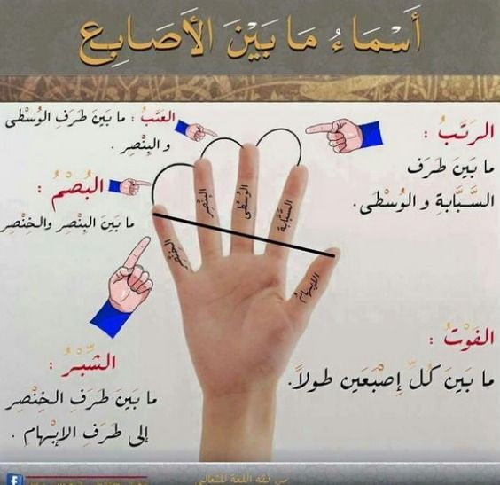 Fingers Learn Arabic Language Arabic Language Learn Arabic Alphabet