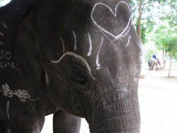 want an elephant!