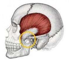 I noticed an immediate difference in my TMJ pain. Repinned by  SOS Inc. Resources  http://pinterest.com/sostherapy.