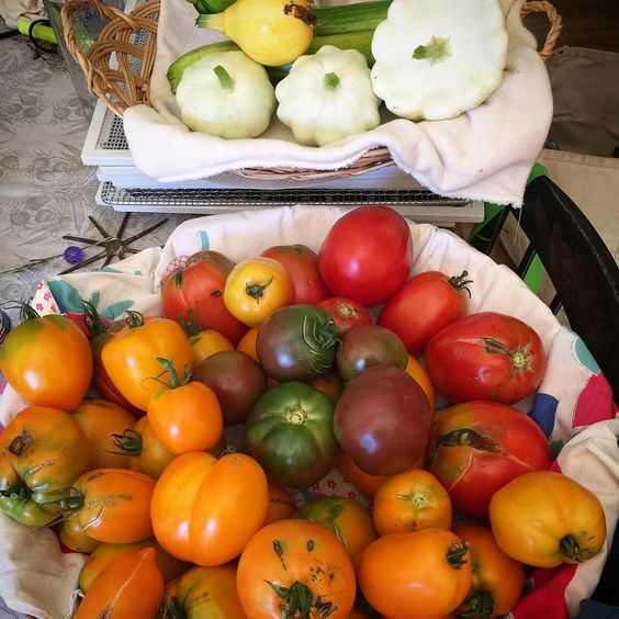 The final harvest was this... times three. And it keeps producing. Summer abundance. AND gratitude. Peace.