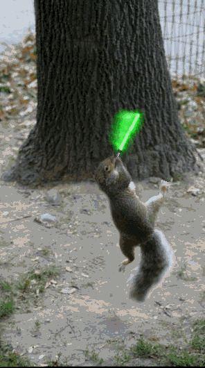 Flying squirrel gif