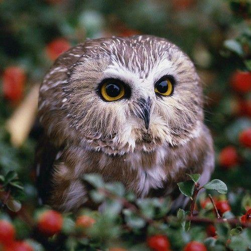 Eule. / Owl.