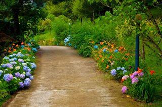 Pela vida: Plantando as flores no caminho