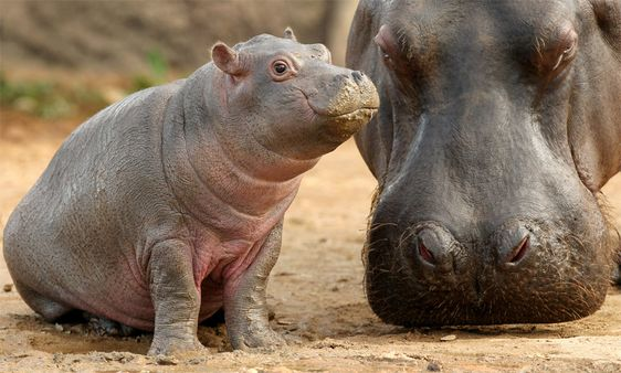 Adorable Photos of Animals With Their Babies That Will Make You Go 'Aww' | One…: