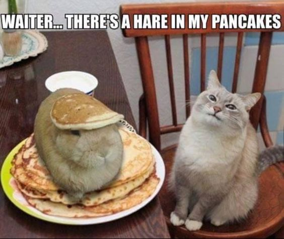 There is a hare in my pancakes...lol