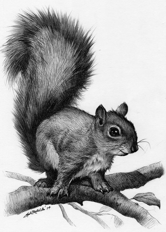 A squirrel drawing