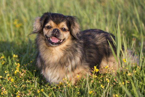 17 Small Dog Breeds That Are Good With Kids Dog Breeds List Dog Breeds Best Dog Breeds