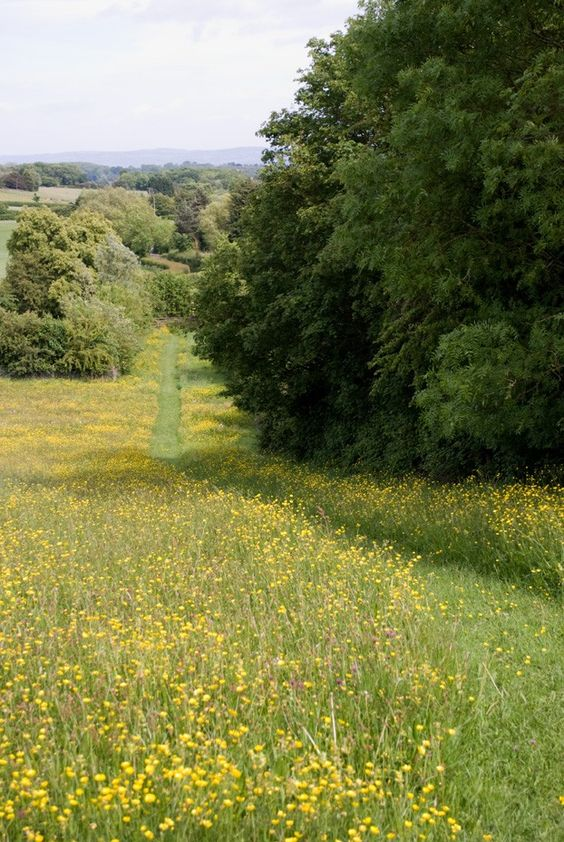 This is the perfect Wildflower Meadow to have a picnic today. Just me and Bee from  The House on Butterfly Lane.....................: