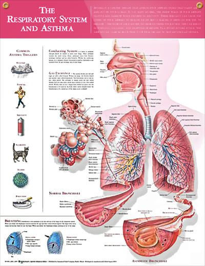 Treating Exercise Induced Asthma Naturally