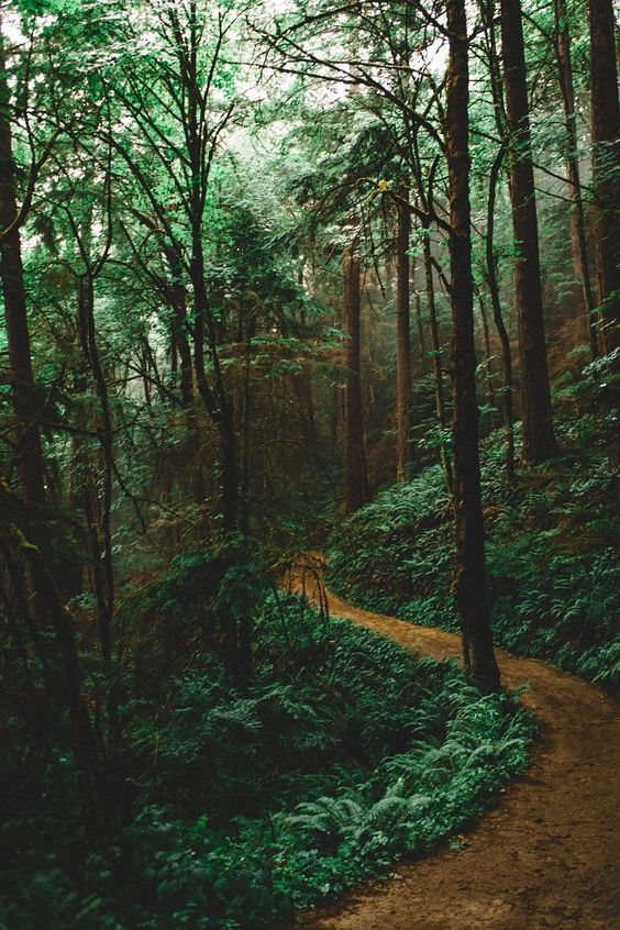 lsleofskye:  Forest Park - Wildwood Trail