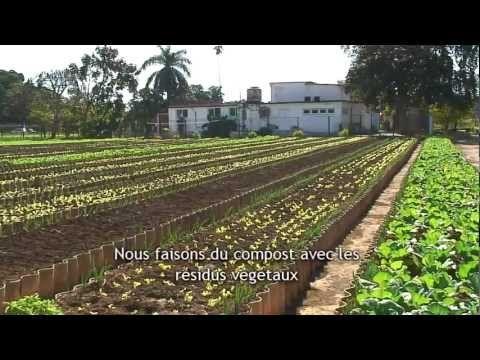 Comment les cubains ont-ils converti leur île à l'agriculture biologique ? - CitizenPost