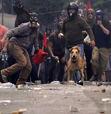 KANELLOS, the riot dog...! sxoliastesxwrissynora.wordpress.com