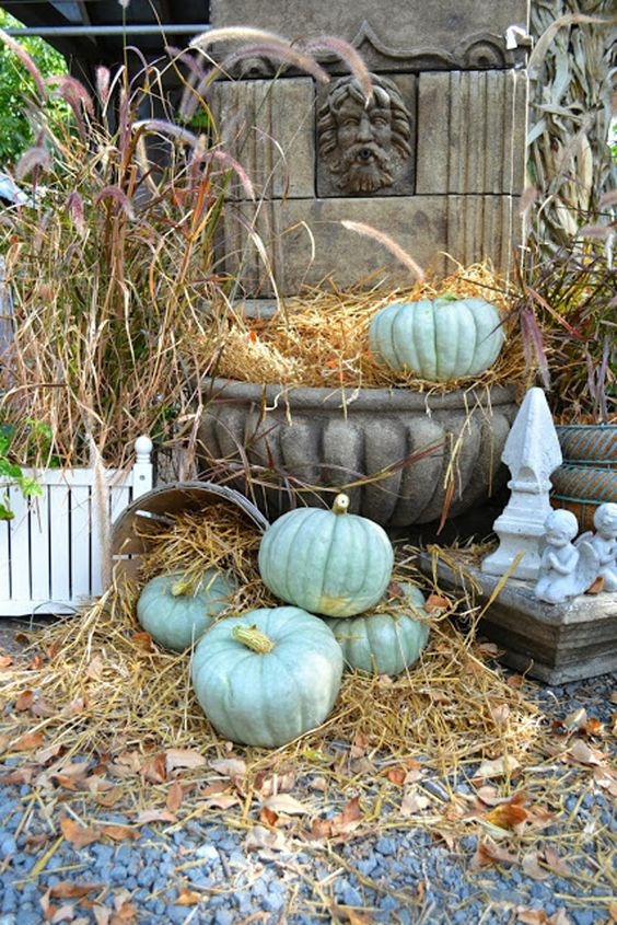These are called Princess Pumpkins. Must find seeds and plant them for next year!! Love these blue Princess pumpkins for Fall, found at Lucketts!