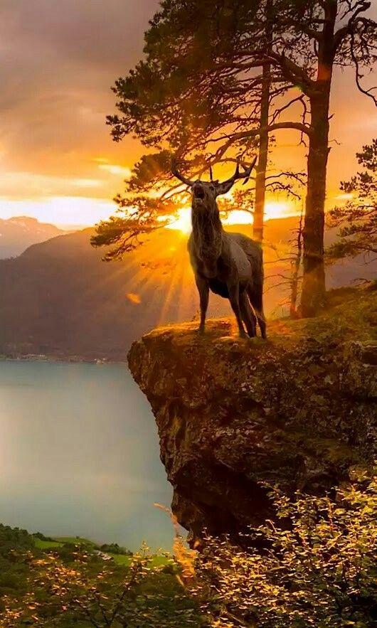 Il Est Merveilleux Fantastique Ce Caribou A Ce Lever De Soleil Excellent Cliche De La Nature Dieren Mooi Fotografie Natuur Natuurfoto S