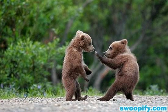 Seen Kungfu Panda? How About Kungfu Bear? #humor #lol #funny