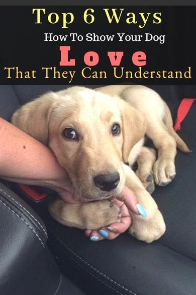 Training Tips For Happy Dogs And Happy Owners Dog Love