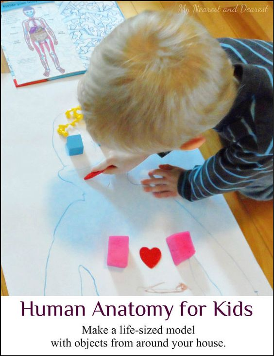 Human Anatomy for Kids. Make a life-sized model using toys, craft supplies, and other random objects from around the house. Science and creativity!