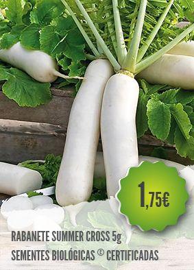 Rabanete Summer Cross Biológico - Variedade tardia, de cor branca, grossa, longa…