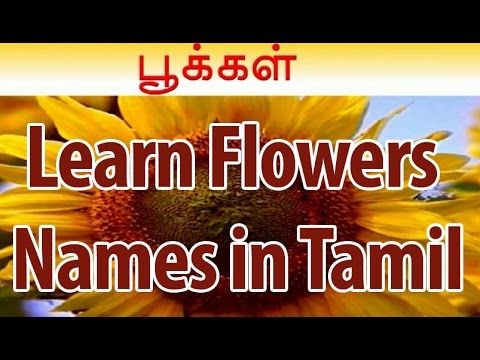 Learn Names Of Flowers In Tamil Flower Animation Learning For Kids Flower Names Aster Flower Flower Quotes