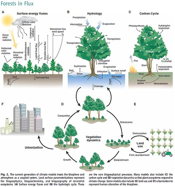 forests and global warming on pinterestecosystem diagram   forest ecosystem diagram