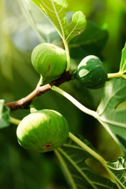 The Best Fruit Trees For North Texas In 2021 Fruit Trees Best Fruits Growing Fruit Trees