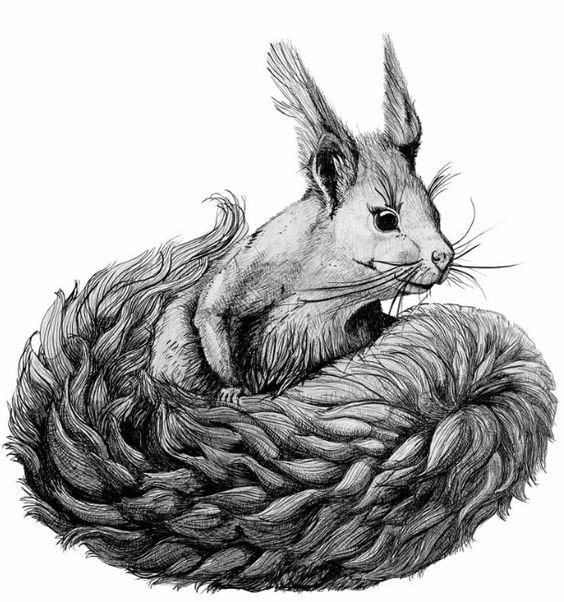 #squirrel #illustration #sketch #pencil #graphite // #eichhörnchen #zeichnung #bleistift #graphit