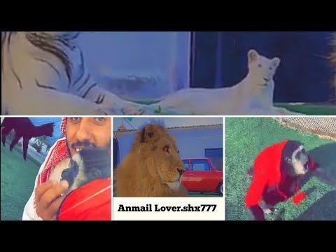 الكل مجتمعين وشوق مليون هلا بزين وبالحب وزيتونه ماتبي احد يصيح ماشاء Animals Pandora Screenshot
