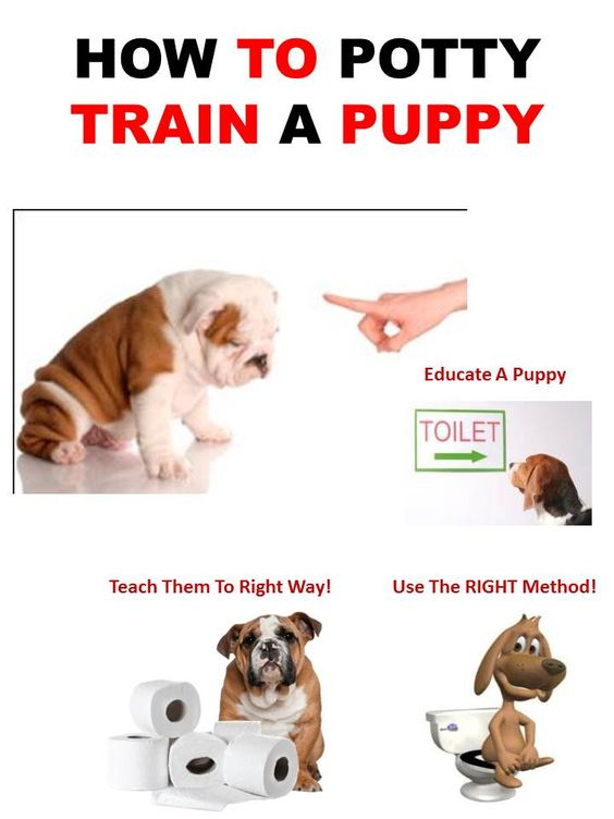 How to potty train a puppy puppy shih tzu maltease for Dog potty training problems