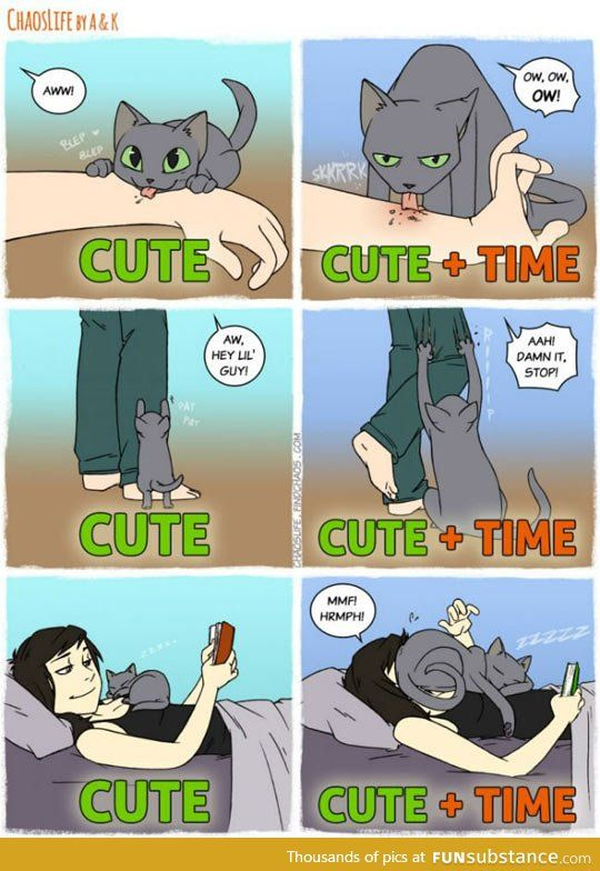 The Unconditional Love Of A Cat