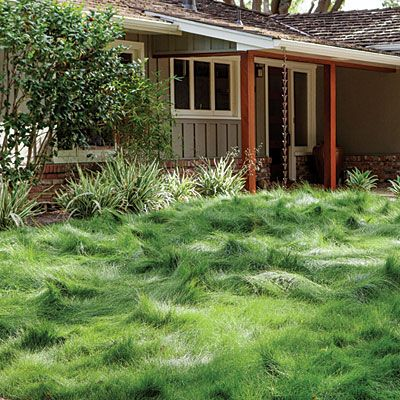 12 Water Wise Groundcovers Drought Tolerant Grass