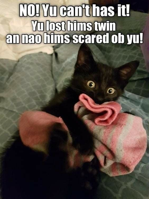 Pin By Lori Reynolds On Best Animal Memes In 2021 Cat Memes Funny Cat Memes Funny Cats