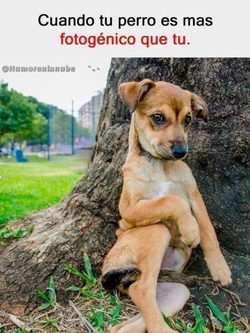 Perros Graciosos Http Enviarpostales Es Perros Graciosos 242 Perros Animales Funny Dogs Funny Dog Memes Funny Animal Memes