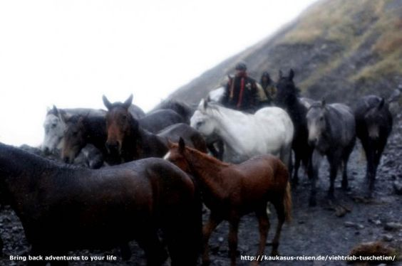 Bring back adventures to your life Cattle drive Tusheti