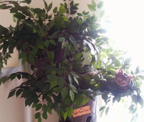 """Tigger Bear"" on his 4.8 Enchanted Cat Tree:"