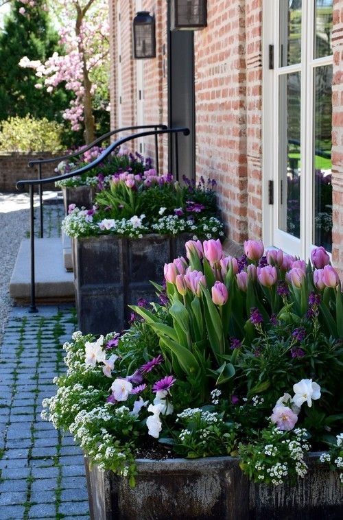 Stunning Tulips And Pansies In A Row Of Raised Beds Up Against A Wall Flowers Tulips Spring Spring Bulbs Garden Garden Bulbs Spring Bulbs