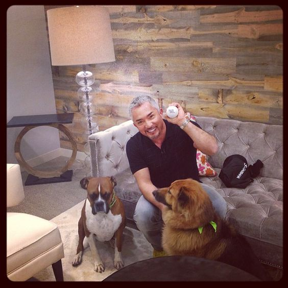Cesar with @Guido Hoermann Ciccone's dogs Chunk and Jax. Watch me on @Chelsea Rose Lately tonight on E! at 11pm!