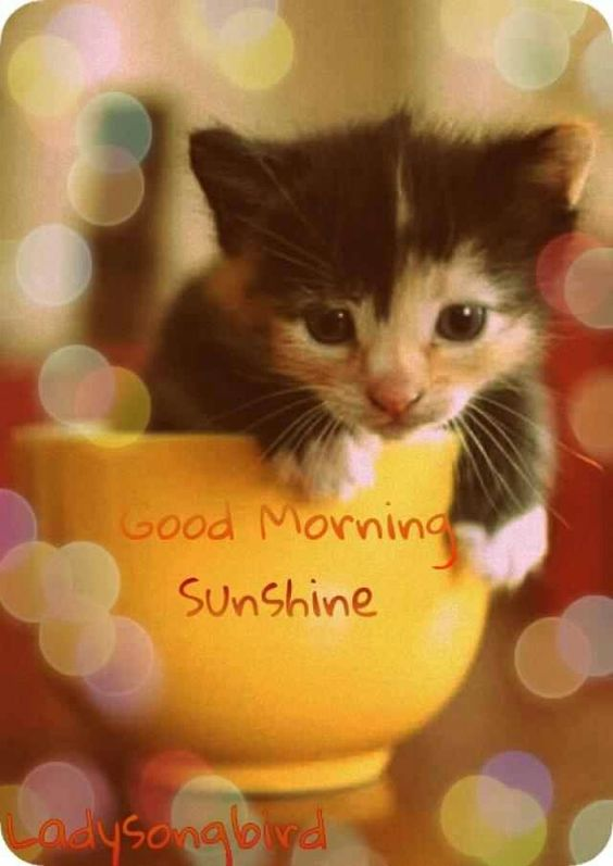 Good Morning Sunshine Tee : Good morning cats and cups on pinterest