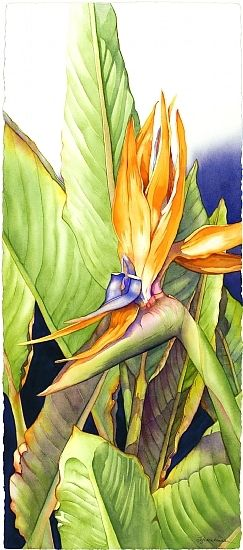 Celebrating Paradise #1 by Barbara Groenteman Watercolor flower flor do paraiso cores fortes contraste