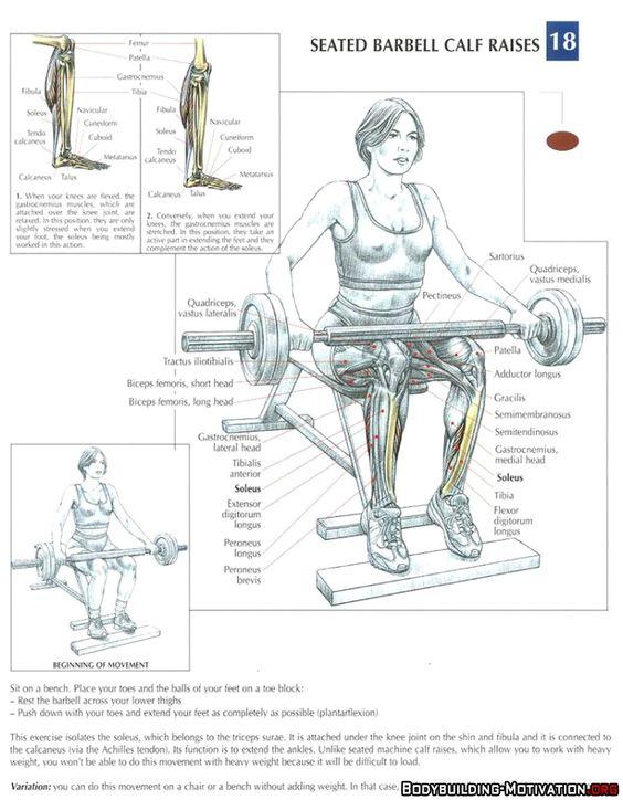 Leg press anatomy