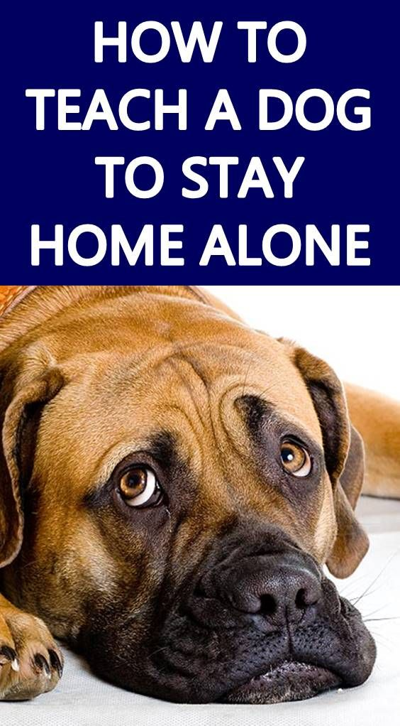 Looking For Tips To Keep Your Dog Busy While You Re At Work Leaving Your Dog Home Alone Can Be A Difficult Thing To Do Here S 8 Tips Dogs Home Alone Your
