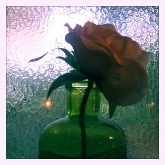 Rose in a small vase