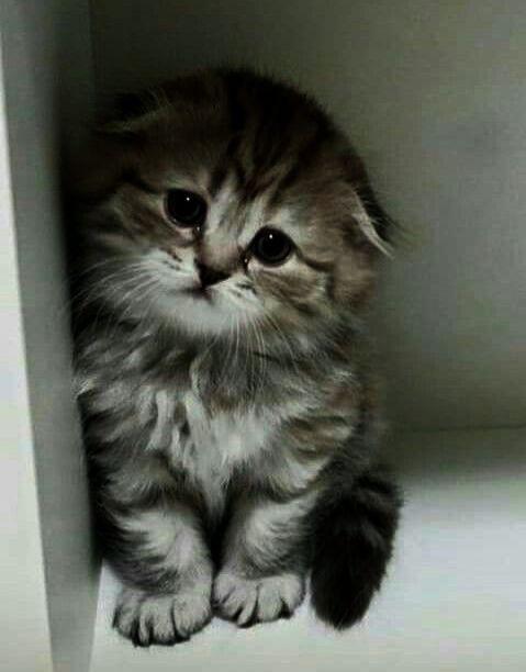 Rrrrrrr Ghghghghgh Kittens Cutest Cats And Kittens Cute Cats