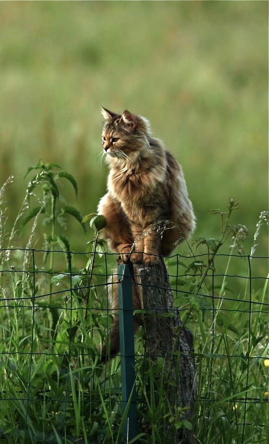 Beautiful photo of cat on field post
