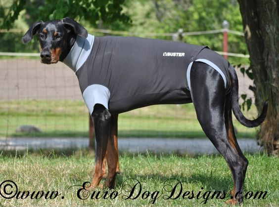 Buster Body Suit for Dogs