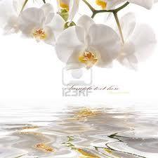 orchidee bianche - Cerca con Google