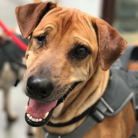 2 Feb 19 Adopt Columbo Already In Uk Soi Dog Foundation Dogs Dog Adoption Cats Cast