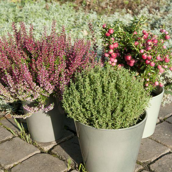 #winter #plants | Dille & Kamille
