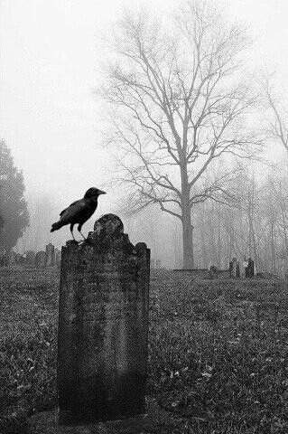 do cardinals never sit on gravestones, or do people just not photograph that?: