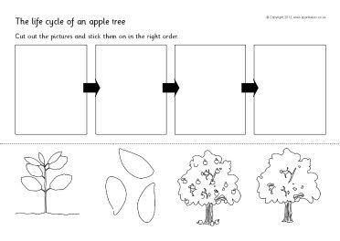 apple tree life cycle sequencing sheets sb8917 sparklebox fruit lesidee n pinterest. Black Bedroom Furniture Sets. Home Design Ideas