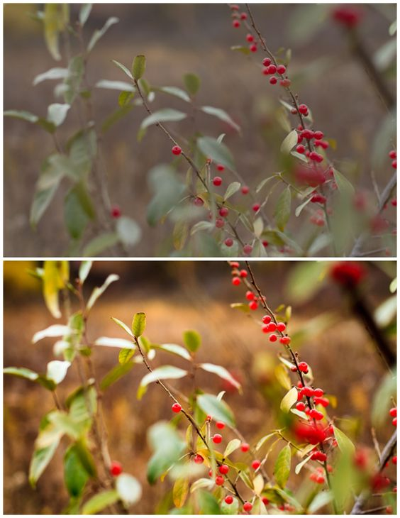 How to Correct Photos with Picmonkey in Under 30 Seconds - Creative Cain Cabin Before & After Berries